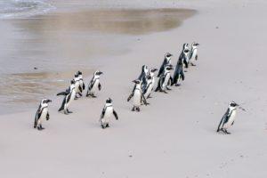 penguin-1719608_1920-e1582557329569.jpg